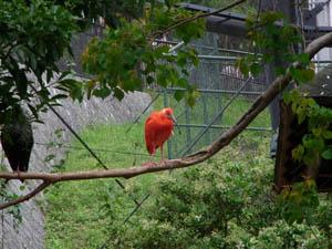 赤い鳥.jpg